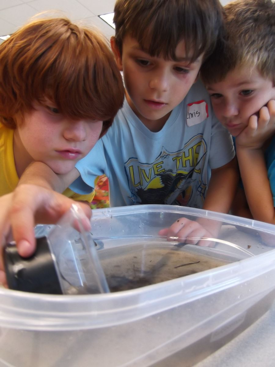 Seagrass beds ecosystem - Life Science Grades K 3 Observe And Describe Various Sea Creatures