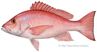 Red Snapper Agreement