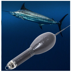 Billfish Research