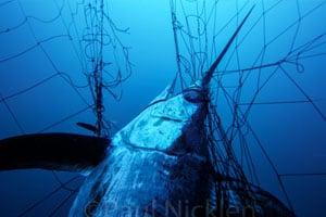 banning gill nets