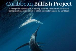 caribbean billfish project