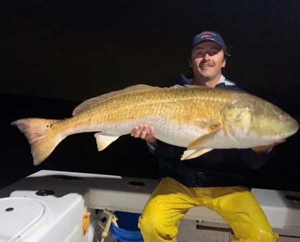 redfish red drum